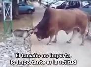 EL TAMAÑO NO IMPORTA